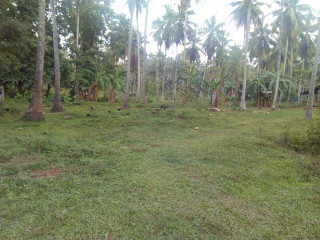 Land for sale in Diwlapitiya